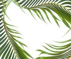 feuilles vertes avec espace copie sur blanc photo