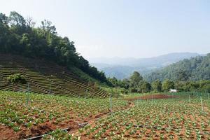 zone agricole en montagne photo
