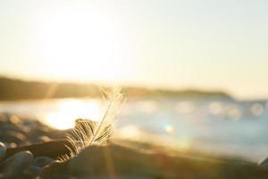 plume sur une plage photo