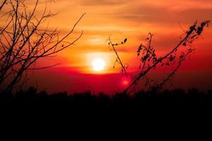 coucher de soleil avec des branches séchées