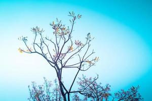 branche de fleur de cerisier photo