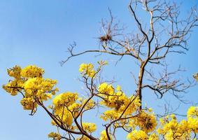 fleur de fleur jaune photo