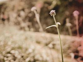 fleur de mauvaises herbes sauvages photo