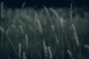 herbes sauvages dans un champ photo