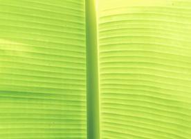 fond abstrait feuille vert clair photo
