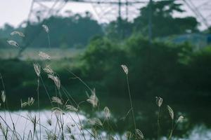 herbes sauvages au bord d'un étang photo