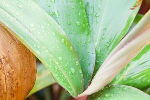 gouttelettes sur les feuilles photo