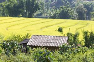 maison au bord des rizières photo