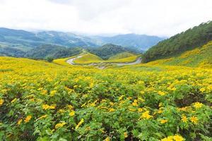 fleurs jaunes en thaïlande photo