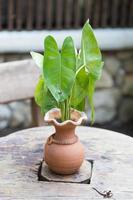 vase en poterie avec des feuilles photo