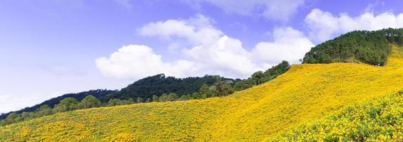 paysage en thaïlande avec des fleurs jaunes