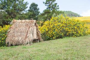cabane sur la pelouse