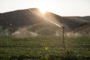 Arroseurs d'irrigation dans un champ de basilic au coucher du soleil photo