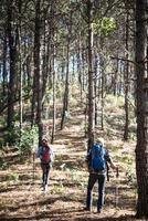 Portrait de couple randonnée dans une forêt de pins photo