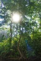 rivière avec soleil qui brille à travers la forêt en thaïlande