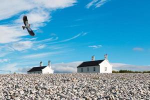 Vanneau oiseau en vol avec des maisons en arrière-plan contre le ciel bleu nuageux photo