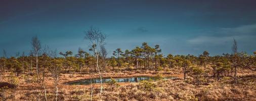Marécage, arbres et ciel bleu nuageux dans le parc national de Kemeri en Lettonie photo