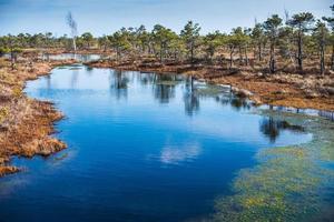 Marécage, arbres et ciel bleu dans le parc national de Kemeri en Lettonie photo