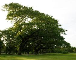 arbres verts au soleil