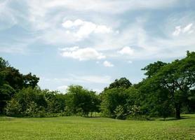 ciel bleu au-dessus de la pelouse verte