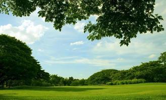 ciel bleu et jardin vert