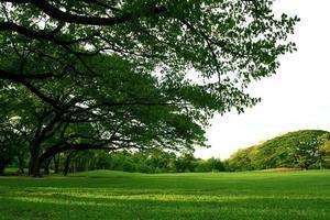 arbres luxuriants et herbe