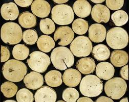 fond de bois rond