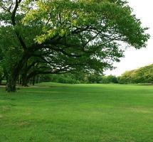 herbe luxuriante et arbres verts