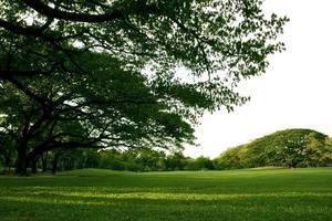 arbres verts luxuriants et herbe