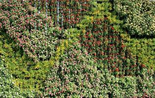 fleurs dans un jardin vertical