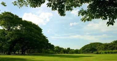 paysage luxuriant pendant la journée