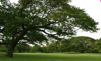 arbres et pelouse