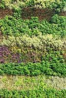 jardin vert vibrant