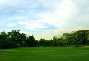 pelouse verte luxuriante au coucher du soleil