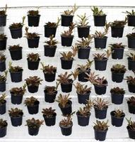 plantes de départ en pots photo