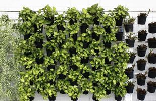 jardinières verticales sur mur photo