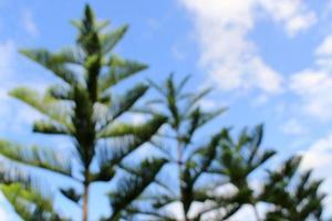 forêt de pins floue