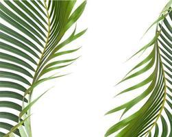 feuilles vertes courbées photo