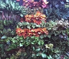 feuilles colorées sur jardin vertical