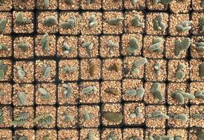Vue aérienne de cactus en pot photo