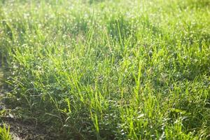 herbe sur le terrain