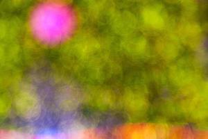 fond de bokeh vert photo