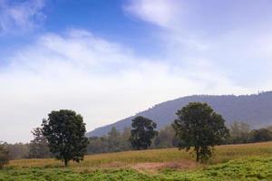 prairie avec des arbres photo