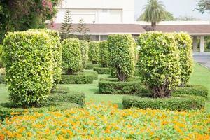 buissons dans le parc en thaïlande photo