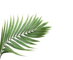 feuille de palmier avec espace copie sur blanc photo