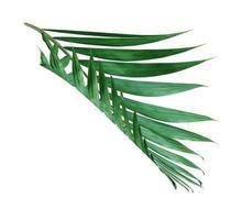 feuille tropicale vert foncé photo