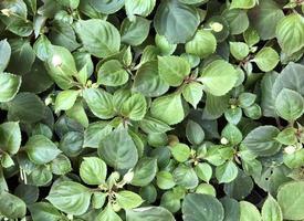 buisson de feuilles vertes tropicales photo