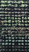 plantes en pot verticales