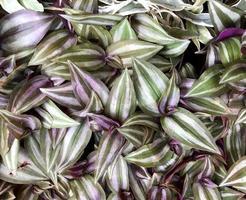 feuilles panachées vertes et blanches photo