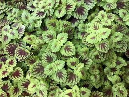 feuilles vertes et rouges photo